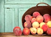 15252193-many-peaches-spilling-out-of-a-basket